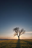 Silhouetted single tree at sunset Stock Image