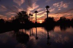 silhouetted solnedgång för park phoenix Fotografering för Bildbyråer