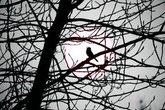 Silhouetted Songbird Stock Images