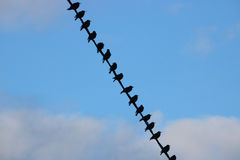 Silhouetted Starlings on Telephone Line Royalty Free Stock Photo