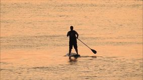 Silhouetted surfboard rower stock video footage