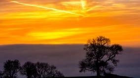 Silhouetted träd B mot soluppgånghimmel i guld- timme Royaltyfria Foton