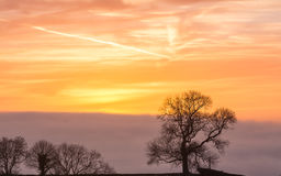 Silhouetted träd C mot soluppgånghimmel i guld- timme Royaltyfria Foton