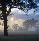 Silhouetted träd i en Misty Clearing Fotografering för Bildbyråer