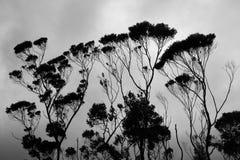 Silhouetted träd med disiga moln baktill Arkivfoto