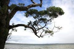 Silhouetted träd med härliga moln i baksidan Arkivbild