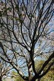 Silhouetted träd med några sidor Arkivbild