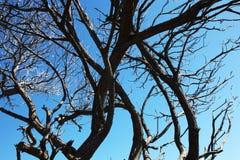 Silhouetted träd mot en blå himmel Royaltyfri Fotografi