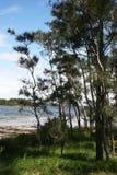 Silhouetted träd mot en blå himmel Royaltyfria Bilder
