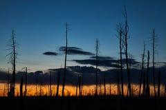 Silhouetted träd mot en färgglad morgon för afton på solnedgången royaltyfria bilder