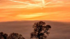 Silhouetted träd A mot soluppgånghimmel i guld- timme Arkivbilder