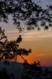 Silhouetted träd på skymninghimmel efter solnedgång Royaltyfria Bilder