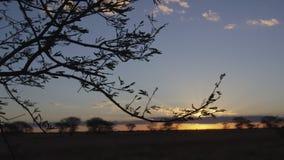 Silhouetted träd på solnedgångskott stock video