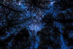 Silhouetted träd som underifrån ses Royaltyfri Fotografi