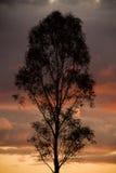 silhouetted tree Fotografering för Bildbyråer