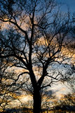 silhouetted tree Arkivbild