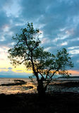 silhouetted tree Royaltyfria Bilder