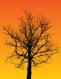 Silhouetted tree Royalty Free Stock Image