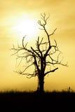 silhouetted tree Arkivbilder