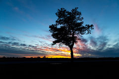 A silhouetted tree against a setting sun Royalty Free Stock Photos