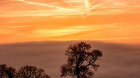 Silhouetted Tree A against Sunrise Sky in Golden Hour. Horizontal photography Stock Images