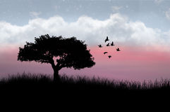 Silhouetted tree and birds. Silhouetted tree and flock of birds in countryside with colorful sunset and cloudscape background Royalty Free Stock Photography