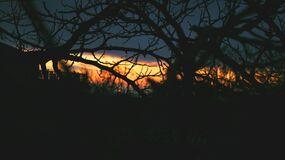 Silhouetted tree branches at sunset