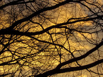 Silhouetted Tree Branches At Sunset Royalty Free Stock Photos