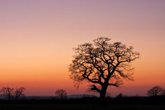 Silhouetted tree in a field at sunset Stock Image
