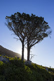Silhouetted tree at the foot of Table Mountain Royalty Free Stock Image
