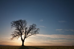 Silhouetted tree on a hilltop at sunset Stock Photos