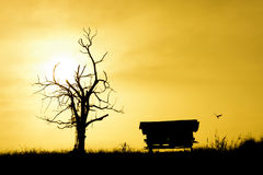 Silhouetted tree ,house. Sunrise with silhouetted dead tree,house Royalty Free Stock Image