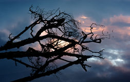 Silhouetted tree on lake stock images