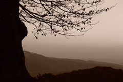 Silhouetted tree in mountains Royalty Free Stock Images