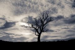 Silhouetted tree in summer time. stock photo