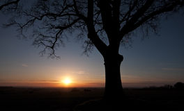 Silhouetted tree at sunset Stock Images
