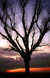 Silhouetted tree at sunset Stock Photo