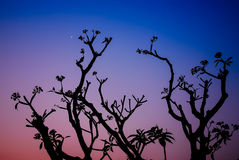 Silhouetted of tree during sunset Stock Image