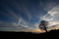 Silhouetted tree in sunset sky Royalty Free Stock Image