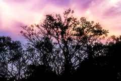 Silhouetted of  tree during sunset. Silhouetted of  tree during with warm sunset Royalty Free Stock Image