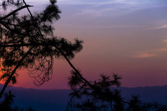 Silhouetted tree on twilight sky after sunset.  Royalty Free Stock Photos