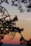 Silhouetted tree on twilight sky after sunset.  Stock Photography