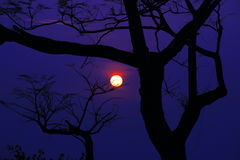 Silhouetted Tree With Surreal Scenic Sunset Royalty Free Stock Image