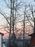 silhouetted trees Arkivbilder