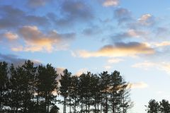 Silhouetted Trees and Clouds Royalty Free Stock Photos