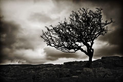 Silhouetted trees and clouds. Black and white scenic view of silhouetted tree on North Yorkshire moors with stone wall and cloudscape background, England Royalty Free Stock Images
