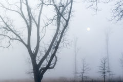 Silhouetted Trees in Fog Stock Photo