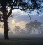 Silhouetted Trees in a Misty Clearing Stock Image