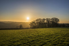 Silhouetted trees at sunrise in fields, Cornwall, UK Royalty Free Stock Images