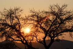 Silhouetted trees at sunset. Scenic view of silhouetted bare branched trees with orange sunset background Stock Images